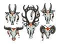 Set of animal skull Royalty Free Stock Photo