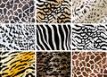 Set of animals skin backgrounds Stock Image