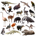 Set Of Animals Of South Americ...