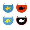 Set of aquarium fish. Goldfish in an aquarium. Fish Fulfills des Royalty Free Stock Photo