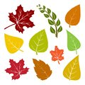 Set of autumn different leaves. Vector illustration