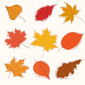 Set of autumn doodle leaves Stock Image