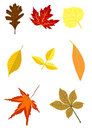Set of autumn foliage Stock Photography