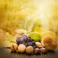 Set of autumn fruit Royalty Free Stock Photo
