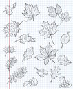 Set of autumn leaves, chestnuts, acorns and viburnum on a background of exercise book in a cage. black contour