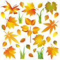 Set of autumn leaves and grass isolated over white Stock Photos