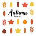 Set of Autumn Leaves and Lettering