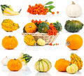 Set of autumn pumpkins Royalty Free Stock Images