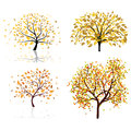 Set  autumn tree Royalty Free Stock Photography