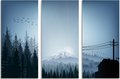 Set of banner forest trees silhouettes landscape