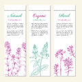 Set of banners with hand drawn sketch mint leaves, peppermint branch, mint flowers, Thyme isolated on white, Natural Royalty Free Stock Photo