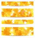 Set of  banners with maple leaves. Stock Photos