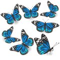 Set of beautiful blue butterflies isolated Vector