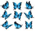 Set of beautiful blue butterflies.