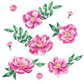 Set of beautiful pink flowers with leaves. Hand drawn watercolor illustration. Isolated on white background.