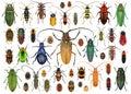 Set of beetles Coleoptera Royalty Free Stock Photo