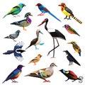 Sada skladajúca sa z vtáctvo