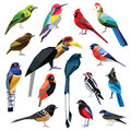 Set of birds colorful low poly design on white background Royalty Free Stock Photos