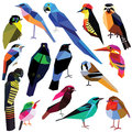 Set of birds colorful low poly design on white background Royalty Free Stock Photo