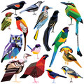 Set of birds colorful low poly design on white background Stock Image