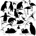 Set of birds vector images Royalty Free Stock Photos