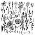 Set of black doodle elements, flowers, meadow, rose, grass, bushes, leaves. Vector illustration, Great design element