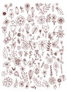 Set of black white doodle flowers leaves. Hand drawn design elements. Brown & white. Vintage. Royalty Free Stock Photo