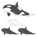 Set of black and white killer whale images.
