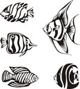 Set of black and white tropical fish Royalty Free Stock Photo