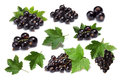 Set of blackcurrant berries (Ribes Nigrum) and leaves, paths Royalty Free Stock Photo