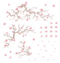 Set of bloom cherry illustration branchs flowers and petals Stock Photo