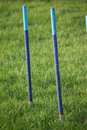 A set of blue agility weave pole items of equipment for dog sport Royalty Free Stock Photo