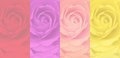 Set of blurred rose background, 4 color, red, purple, pink, yellow. Royalty Free Stock Photo