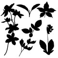 Set of botanical silhouettes. Vector Royalty Free Stock Photo