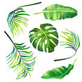 Set of botanical vector illustrations of tropical palm leaves in a realistic style.
