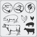 Set of butchery labels and emblems: chicken, pork and beef. Vintage style. Illustration of cow, hen and pig. Royalty Free Stock Photo
