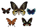 Set with butterflies Royalty Free Stock Photos