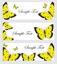 Set butterflies banner. Banner template with butterflies. Colored butterfly banner. Vector illustration