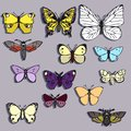 Set of butterflies of different colors Stock Photo
