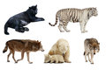Set of carnivora mammal isolated over white background with shade Royalty Free Stock Photo