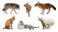 Set of Carnivora mammal over white Royalty Free Stock Photo