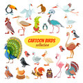 Set of cartoon birds Royalty Free Stock Photo