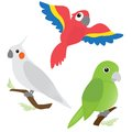 Set of cartoon parrots Stock Photo