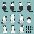Set of cat sitting poses