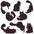 Set Cats - vector