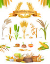 Set of Cereals and Grains on White Background Royalty Free Stock Photo