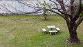 The set of chair and table in the garden with big tree Stock Photography