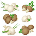 Set of champignon with green onions and parsley Royalty Free Stock Images