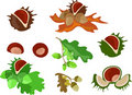 Set of chestnuts and oaks Royalty Free Stock Image