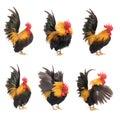 Set of chicken bantam isolated Royalty Free Stock Photo